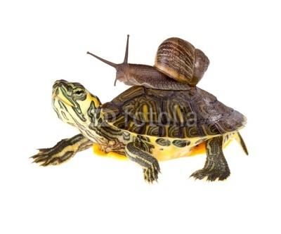 snailturtle